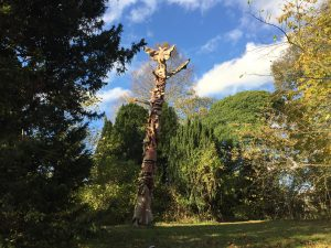The sculpture was carved from the remains of a 100 year-old Monterey Cypress tree by Ben Platts -Mills and tells the story of silk from the moth to the finished garment.